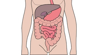 The digestive and urinary system